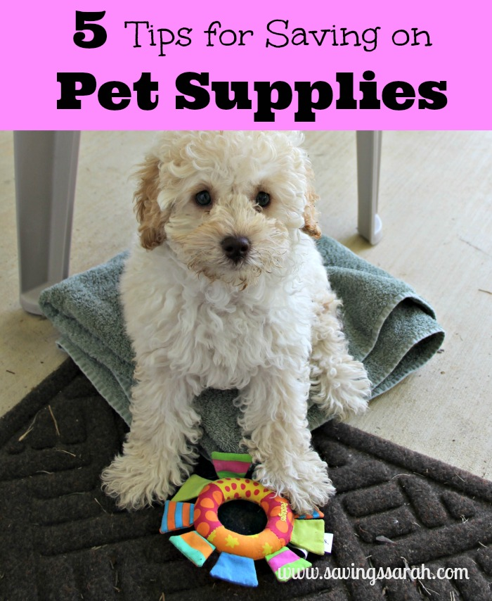 5 Tips for Saving Money on Pet Supplies