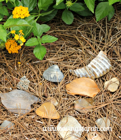 Sea Shells in the Flower Bed