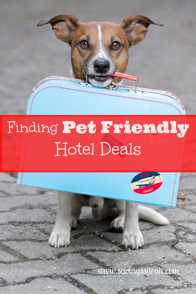 Travel with Pets-Finding Pet Friendly Hotel Deals