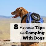 8 Essential Tips for Camping With Dogs
