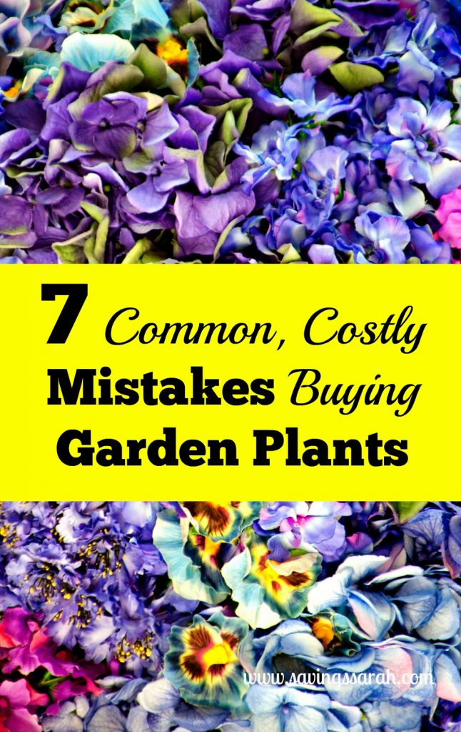 7 Common Costly Mistakes When Buying Garden Plants